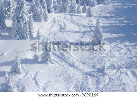 Pine trees covered by snow - stock photo