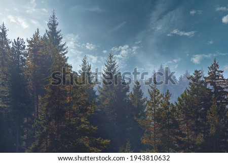 Pine trees forest stylized silhouette photo sunset background