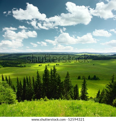 Pine trees green meadows and blue sky with clouds