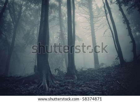 pine trees in a dark forest with green fog