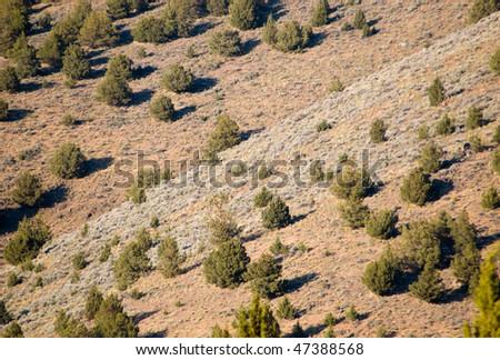 pine trees on a hillside