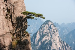 Pine trees on cliff edge, Huangshan Mountain Range in China. Anhui Province - Scenic landscape with steep cliffs and trees during a sunny day.