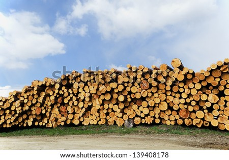 Pine whole section timbers combined by the mountain, ready to sending on timber mill