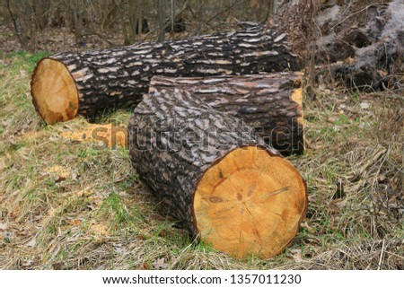 pine wooden logs in forest clearing #1357011230