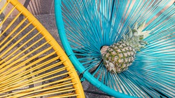 Pineapple. Ananas comosus. One ananas with blue and yellow background.