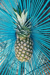 Pineapple. Ananas comosus. One ananas with blue background.