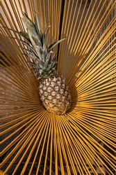 Pineapple. Ananas comosus. One ananas with yellow background.