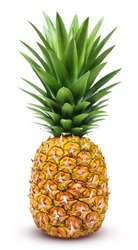 Pineapple isolated. One whole pineapple with green leaves isolated on white background with clipping path