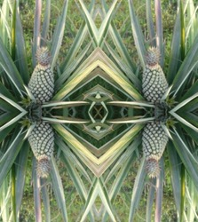 Pineapple motif plant images, Art motif images from natural images.