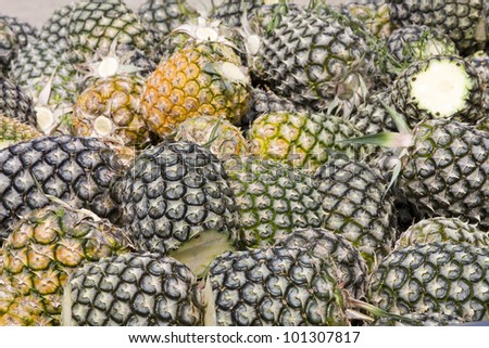 Pineapple on the plant tropical fruit in nature