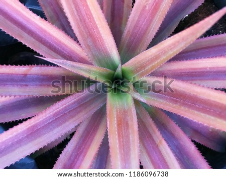 Pineapple plant closeup #1186096738