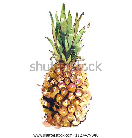 Pineapple watercolor hand drawn illustration. Beautiful colorful painting art sketch of exotic tropical fruit isolated on white background for summer nature design, botanical print card.
