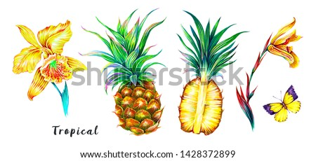 Pineapples, exotic flowers, orchid, butterfly, tropical set isolated on white background. Botanical illustrations, summer floral elements