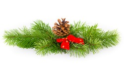 Pinecone and fir on white background