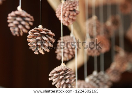 Pinecone for decorate house