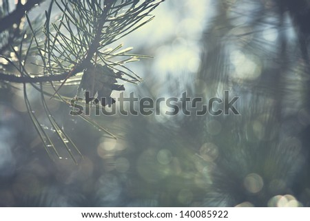 pinecone on a pine tree vintage