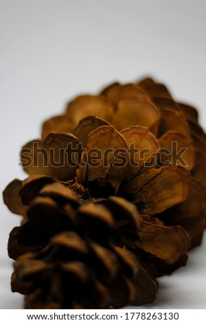 Pinecone pine on a white background Stock photo ©