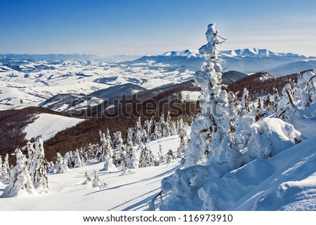 Pines covered with snow on a mountain hill, winter landscape