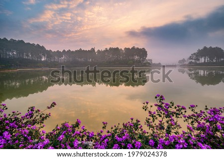 Pines forest and beautiful lake in Ban Ang Village, Moc Chau, Vietnam Zdjęcia stock ©