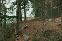 Pines growing in stoned surface of forest on cliff on riverbank. Grey cloudy sky and lake on background. Chilling air of coniferous landscape. Wild nature, far away from people and hi-tech