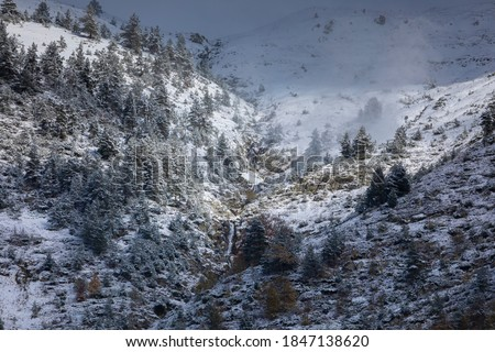 Photo of  Pines in a snowy mountains landscape in the Aragonese Pyrenees. Near of Aguas Tuertas valley, Hecho and Anso, Huesca, Spain.
