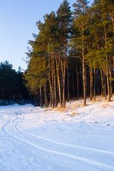pinetrees winter landscape