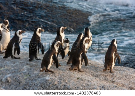 pinguin national parks and nature reserves of south africa Stockfoto ©