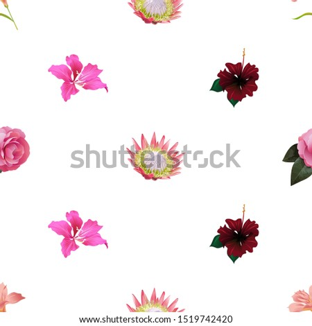 Pink Amaryllis. Pink Protea. Pink Balsam. Pink Bauhinia Purpurea. Red Rose Mallow. Illustration. Seamless background pattern. Floral botanical flower. Wild leaf wildflower isolated. Exotic tropical.