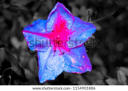pink and blue flowers bloom in darkness