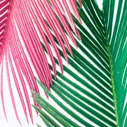 Pink and green tropical leaves on white background. Minimal summer exotic concept.