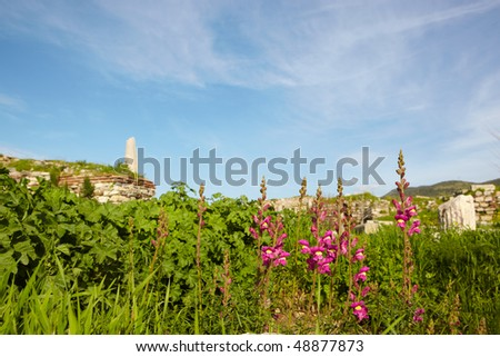 Pink and Magenta flowers at the ruins of the st. Johns Basilica on Ayasuluk Hill, Selcuk, Ephesus, Turkey.