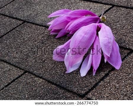 Pink and purple magnolia flowers on asphalt shingles roof