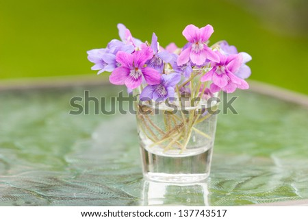 Pink and purple violets in a glass vase on a glass patio table