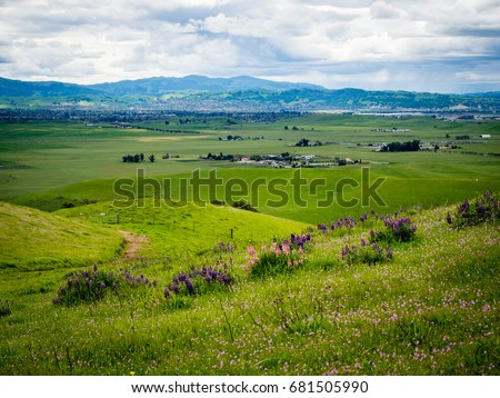 Pink and purple wildflowers on grassy green hill with ranches in Livermore and Ruby Hill Neighborhood in Pleasanton, California in the distance. Los Vaqueros Watershed, Livermore, California