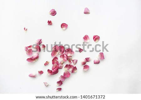 pink and red petals background / abstract aroma background, spa pink petals #1401671372