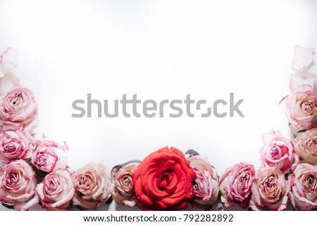Pink and red roses buds on white background. Flat lay, top view. Valentines background #792282892
