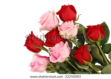stock photo : Pink and red roses isolated on white background