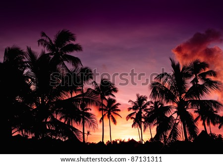 Pink and red sunset over sea beach with palms Dominican republic