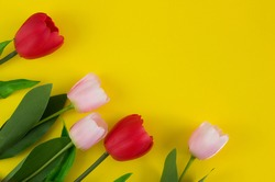 Pink and red tulips on a yellow background. Background for design. Spring background. Mother's Day. Women's Day. Spring Day. Easter background. Easter. Copy space