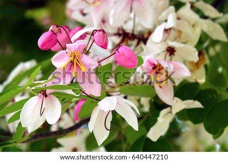 Pink And White Flowers On A Tree In A Garden Ez Canvas