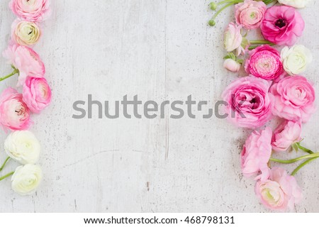Pink and white ranunculus blooming flowers on white wooden background flat lay scene #468798131