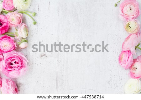 Pink and white ranunculus flowers on white wooden background flat lay scene #447538714