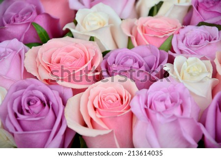 Pink and white roses background, shallow depth of field