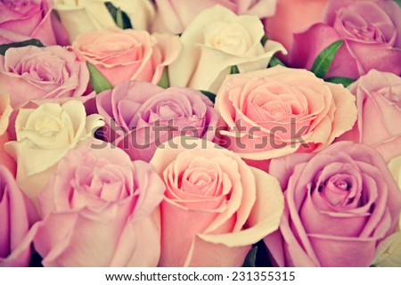 Pink and white roses background, shallow depth of field. Retro vintage instagram filter