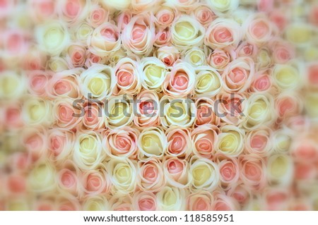 Pink and white roses with blurred frame as background.