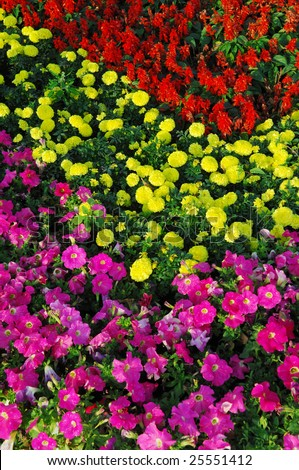 yellow flowers background. yellow flower background