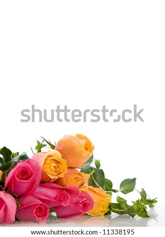 pink and yellow roses - stock photo