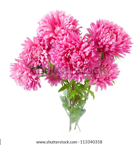 Pink aster bunch isolated on white background - stock photo
