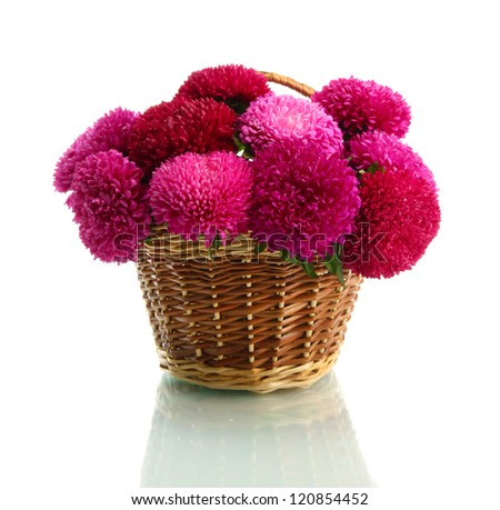 pink aster flowers in basket, isolated on white