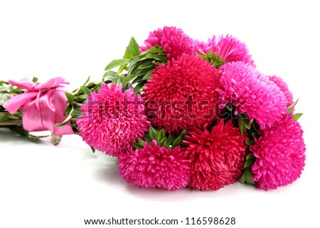 pink aster flowers, isolated on white